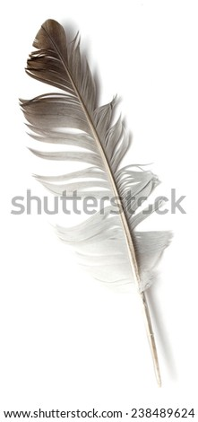 Beautiful feather , isolated on white - stock photo