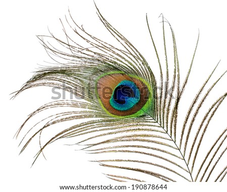Beautiful feather of peacock isolated on white