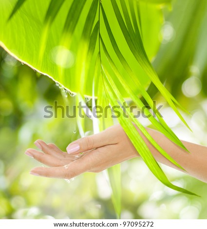 Beautiful Female Hands on the green background of a tropical forest's leaves with drops - stock photo