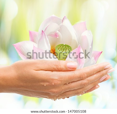 Beautiful Female hands with Shiny Pink Lotos �¢?? exotic tropical flower on light background - stock photo