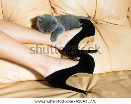 Beautiful female legs in black leather shoes with high heels and grey cute kitten on couch