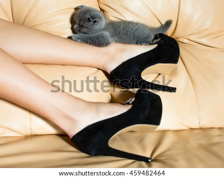 Beautiful female legs in black leather shoes with high heels and grey cute kitten on couch - stock photo