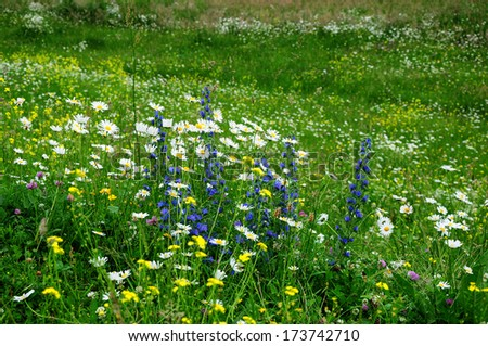 Beautiful field flowers - stock photo