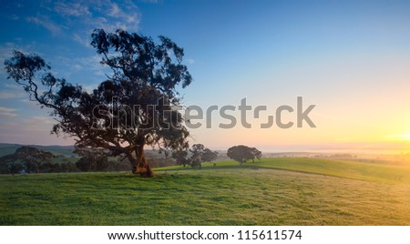 Beautiful Field in the Clare Valley, South Australia - stock photo