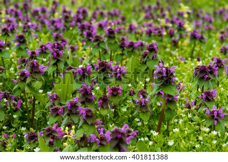 Beautiful field mauve wildflower in grass - stock photo
