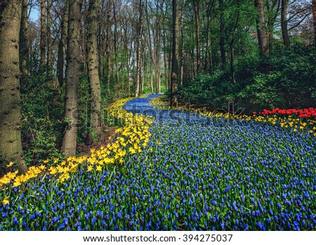 Beautiful field of spring flowers with narcissus, tulips and muscari