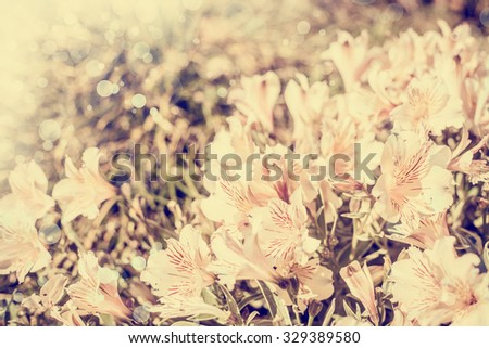 beautiful field of white wflowers as background in the nature, soft light, closeup - stock photo