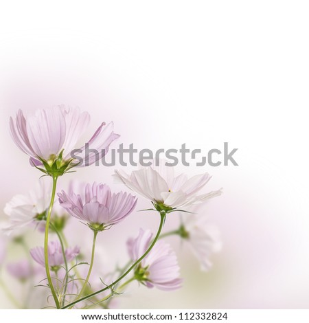 Beautiful fields flowers - stock photo