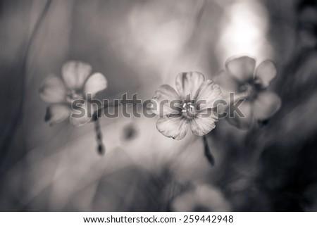 Beautiful flax flowers  on meadow - stock photo