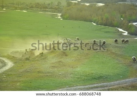 Beautiful flock of sheep  landscape against the background of river