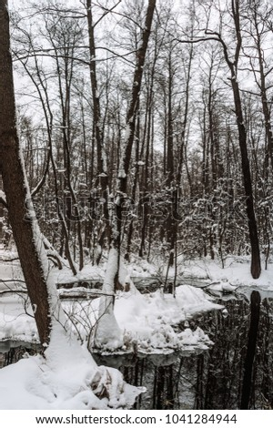 Beautiful flooded forest in winter time