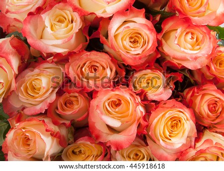 Beautiful floral background made of delicate yellow, pink and red roses with wet petals closeup - stock photo