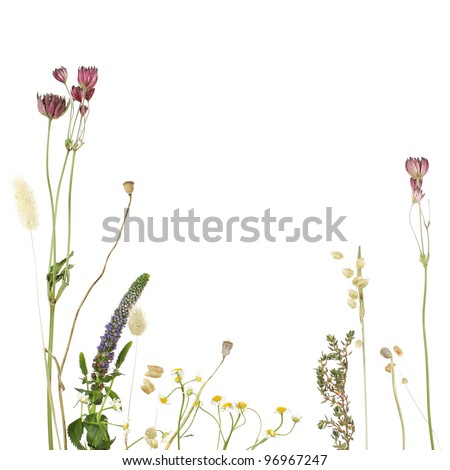 Beautiful floral border - stock photo
