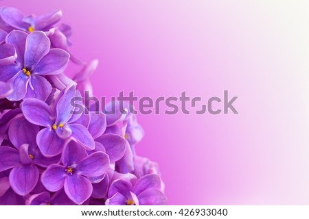 Beautiful floral border with flowers of lilac. With copy-space.