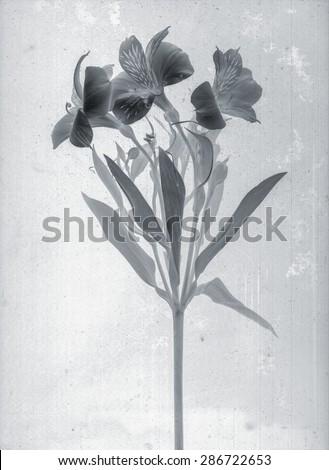 Beautiful Floral Branch Daguerreotype Film Grain Stock Illustration ...