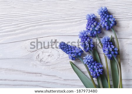 Beautiful floral frame with blue flowers muscari and wood surface  - stock photo