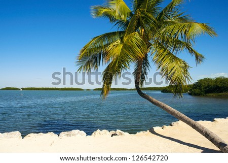 Beautiful Florida Keys along the shoreline with palm tree and bay view. - stock photo
