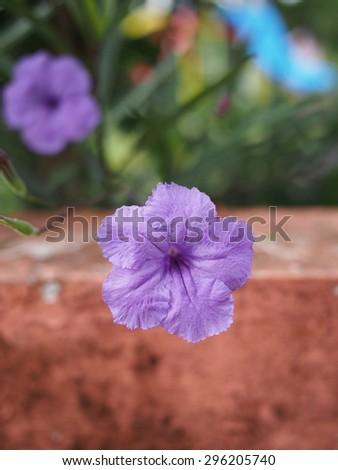 Beautiful Flower - stock photo