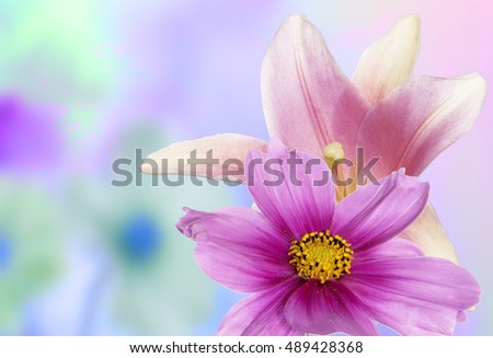 Beautiful flower