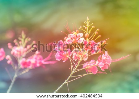 beautiful flower background made with color filter - stock photo