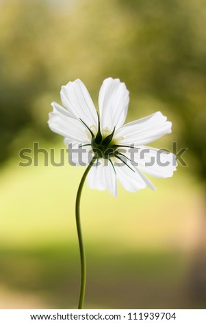 Beautiful flower backside - stock photo