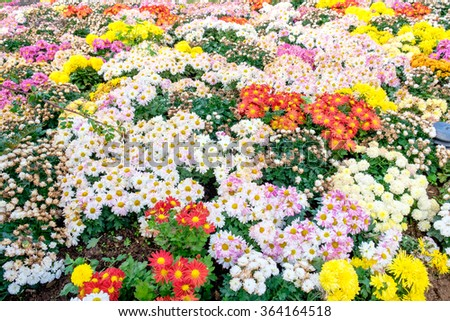 Beautiful flower colorful variety in garden - stock photo