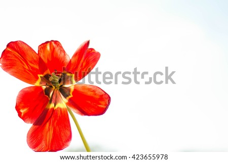 Beautiful flower in a vase