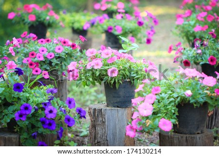 Beautiful flower in beautiful garden - stock photo