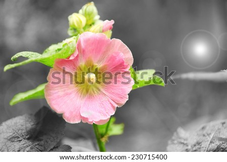 Beautiful flower in garden