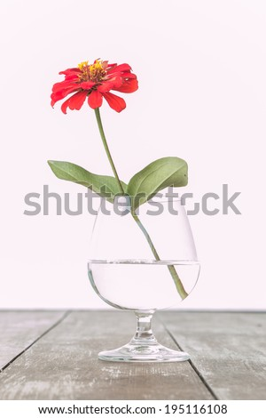 Beautiful  flower in glass of water on white background - stock photo