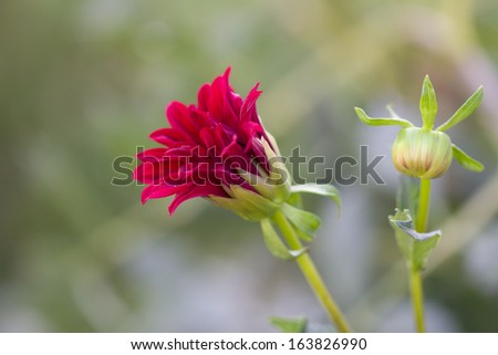 beautiful flower in nature - stock photo