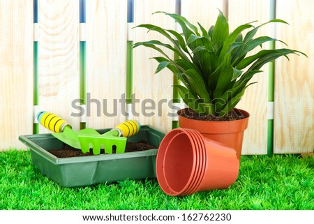 Beautiful flower in pot on grass in garden