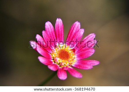 beautiful flower in the garden - stock photo