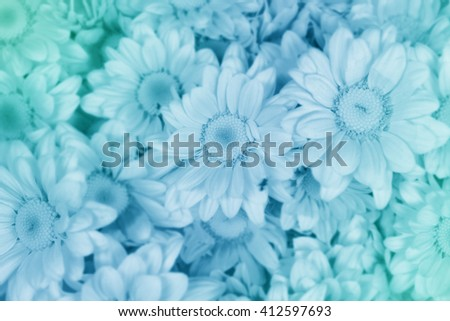 beautiful flower made with color filters and soft focus for background