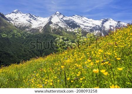 Beautiful flower meadow in the Italian alps, Europe - stock photo
