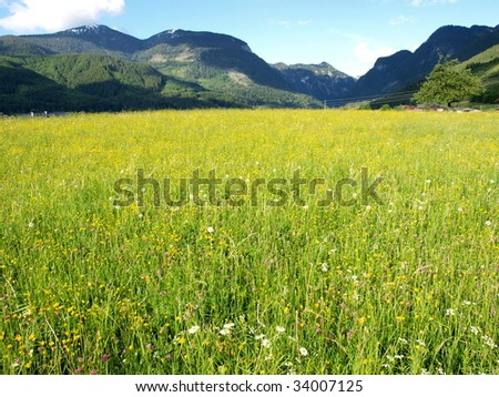 Beautiful flower meadow of village in spring. - stock photo