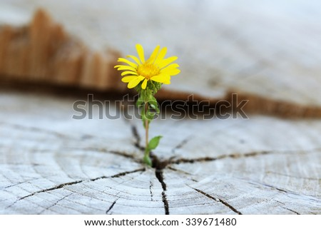 Beautiful flower seedling growing in the center trunk as a concept of new life - stock photo