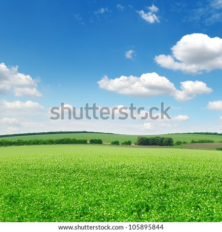 Beautiful flowering fields and beautiful clouds - stock photo