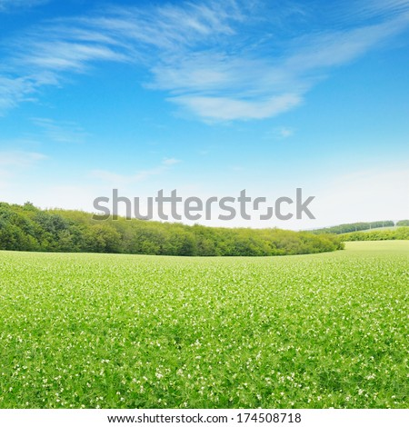 Beautiful flowering fields and sky - stock photo