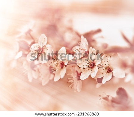 Beautiful flowering fruit tree  - stock photo