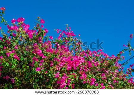 Beautiful flowering shrubs against the blue sky. - stock photo