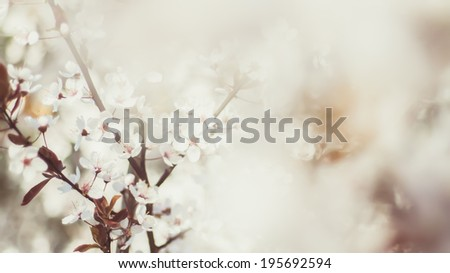 Beautiful flowering tree branches. Nature photography. Shallow DOF and bokeh. Vivid colors. - stock photo