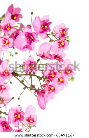 beautiful flowers against white background