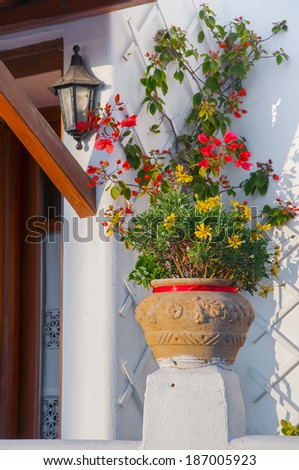 Beautiful flowers and bougainvillea in a pot near the entrance to the house at sunset.