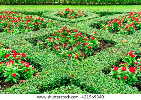 Beautiful flowers bed graphic green leaf in natural garden fresh parks