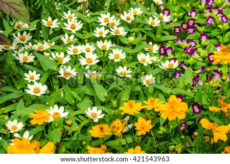 Beautiful flowers bed with white and yellow purple  daisies in green park garden