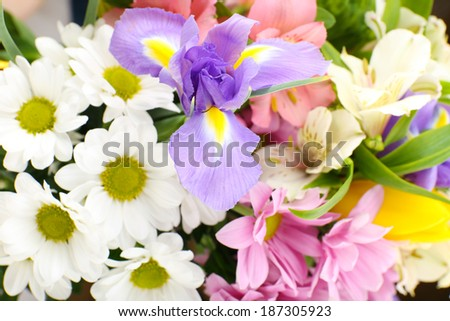 Beautiful flowers close up