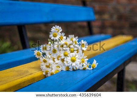 Beautiful flowers daisies on the bench - stock photo