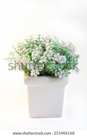 Beautiful flowers in a white flowerpot on white background. - stock photo