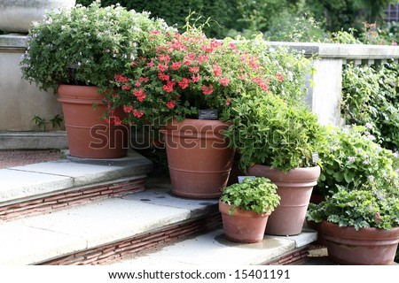 Beautiful flowers in clay pots - stock photo